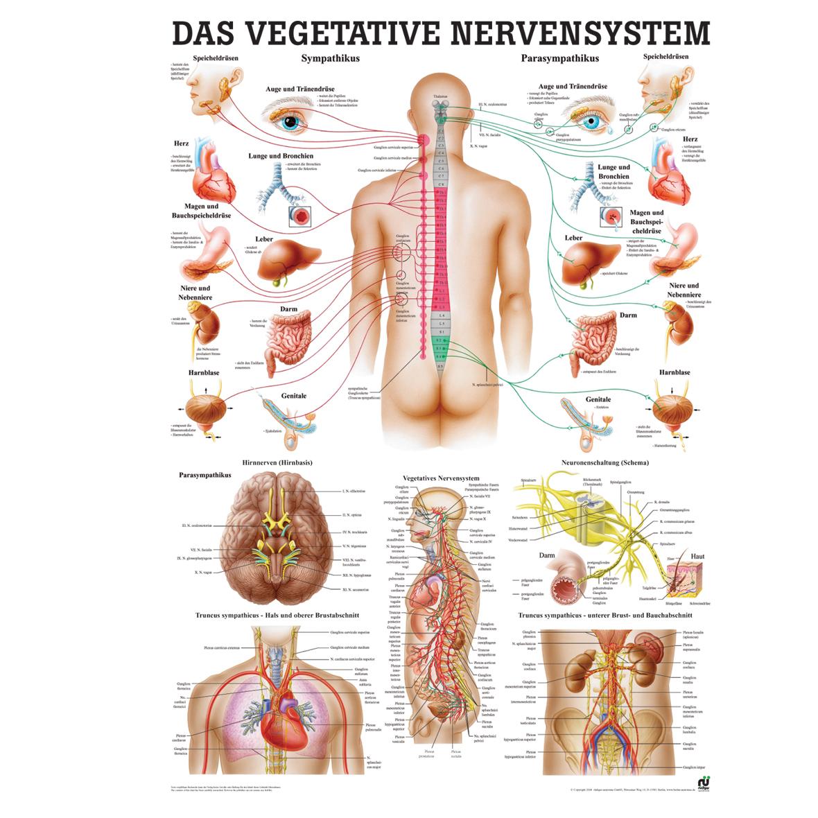 Gehirn und Nerven, Wissenladen.de