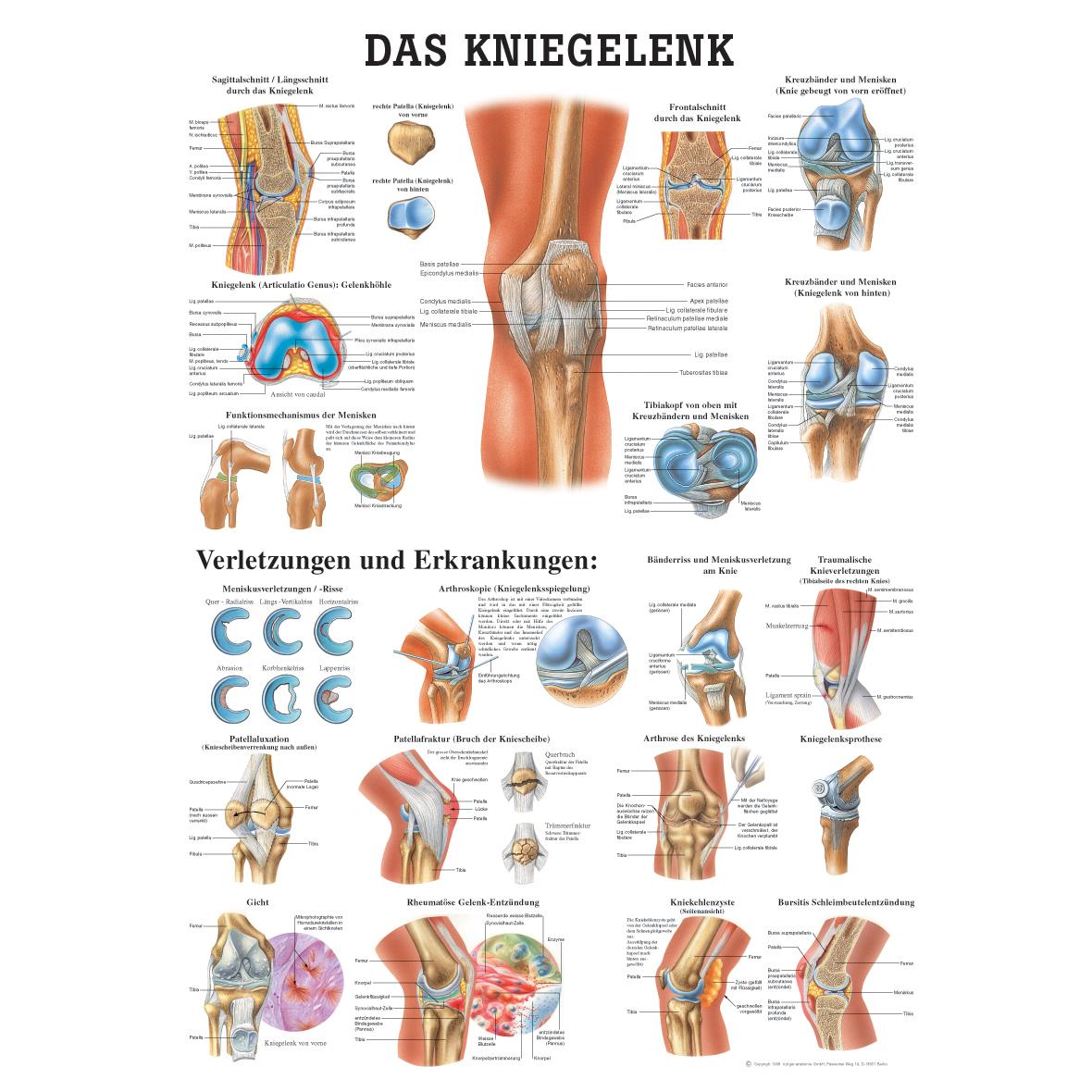 Ziemlich Ohr Bild Anatomie Zeitgenössisch - Menschliche Anatomie ...