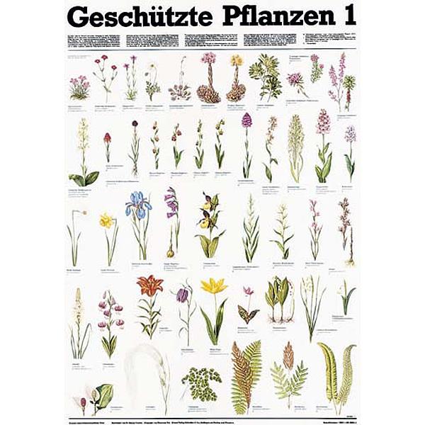 Schreiber naturtafel &;geschützte pflanzen 1&;