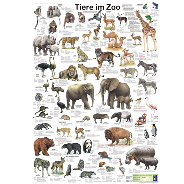 bio poster tiere im zoo. Black Bedroom Furniture Sets. Home Design Ideas